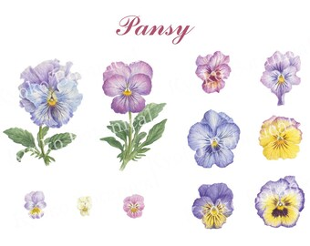 pansy and violet , watercolor painting , digital image