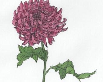 ORIGINAL purple chrysanthemum flower