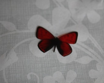 transparent Butterfly red and Black 2.2 x 1.5 cm, n100