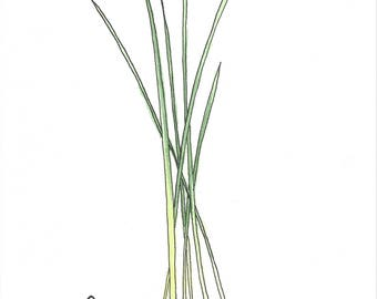 Chives Herbs Watercolor