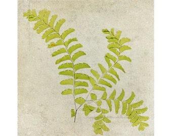 Botanical Fern Print, Maidenhair Fern Art, Nature Photography, Scanned Fern, Green Woodland Home Decor,  X-Ray Effect, Rustic Wall Decor