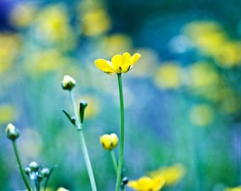 Nature Photography romantic Spring Flowers wall decor art yellow color turquoise for her women green blue mustard citrine summer Art Photo
