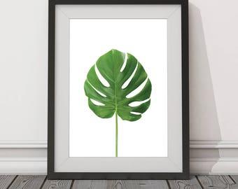 Leaf, Minimalist, Nature, Close, Digital Download, Art, Print, Poster