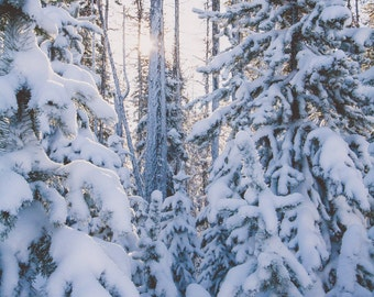 Winter Wonderland, Print or Canvas, Donating 90% of Profits to Charity, snow, trees, home decor, office decor
