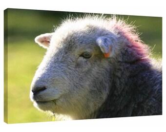Ewe Punk Sheep Face Canvas Wall Art Print