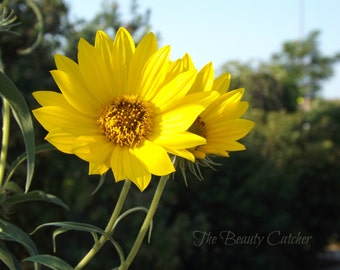 Bright and Sunny