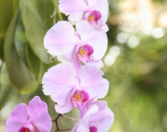 Wild Orchids Plants Tree Pink flowers Nature Photography Breeze 4x6 5x7 8x10 11x14 Print