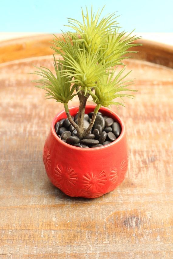 red succulent planter