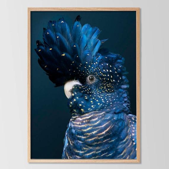 Black Cockatoo Print Bird Wall Art Blue Decor Large