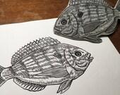 Pinfish porgy fishing ang...