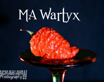 MA Wartyx (15+ Seeds)