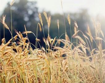 Summer Field, Art, Photography, Fine Art Print, Summer Light, Wheat, Teal,Green, Sunshine