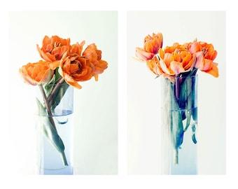 Tulip Art, Tulip Prints, Still Life Photography,  Flower Photography,  Orange Wall Decor, Bedroom Decor, Tulip Wall Art