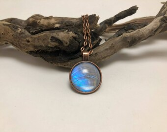 Jewelry, butterfly, Real Butterfly jewelry, butterfly Wing Necklace, Pendant, butterfly wing pendant, butterfly necklace, morpho sulkowskyi