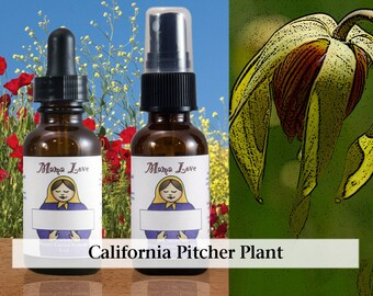 California Pitcher Plant Flower Essence, 1 oz Dropper or Spray for Reclaiming Your Sacred Physical Body and Instinctual Well-being
