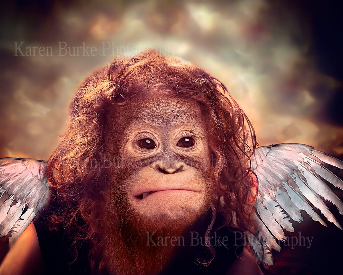 Funny Angel Portrait Orangutan Animal Morph Funny Animal