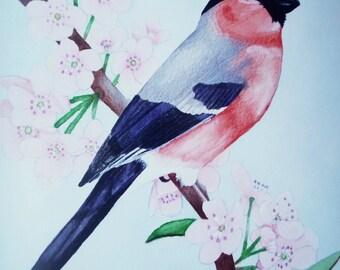 "A Lovely Bullfinch Watercolour 10"" x 12"" Print"