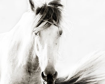 Horse Photography, black and white horse photography, fine art equine photography, Horse Poster, Horse Picture, High Key equine art
