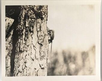 "1927 Vintage Photo ""Mating Season"" Snapshot Antique Black & White Photograph Paper Found Ephemera Vernacular Interior Design Mood - 104"