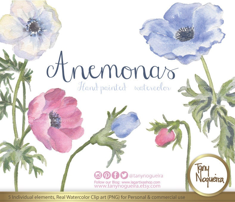Anemonas Elementos Clipart Flores Burlap Marcos Fondos