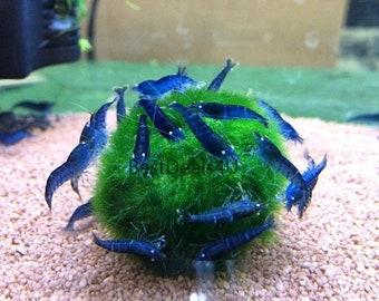 1 pc 4,5-5cm Aquarium Marimo moss balls Fish/shrimp tank