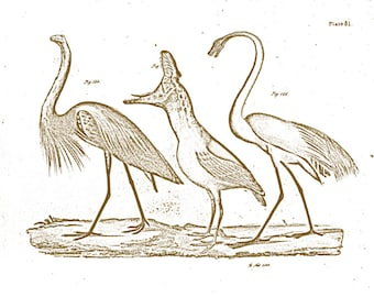 Among Us - Vintage Dinosaur Birds in Nature - 8x10 Inch Print - Free Shipping