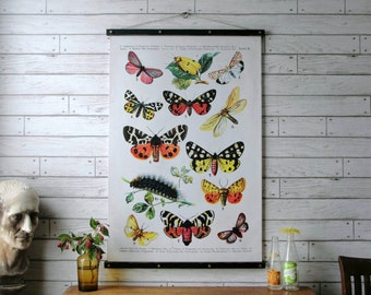 Butterflies Chart / Vintage Pull Down Chart Reproduction / Canvas Fabric Print / Oak Wood Poster Hanger with Brass Hardware / Wall Hanging