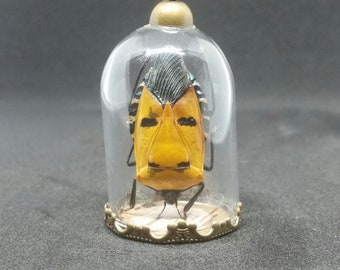 Man-Faced bug in glass dome with wood bottom