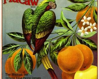 Riverside Mission Inn Macaw Parrot Orange Citrus Fruit Crate Box Label Art Print