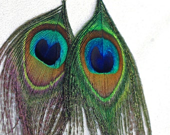 Natural Peacock Feather Earrings Gift Idea