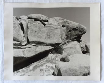 Set of Four Large Joshua Tree Photos