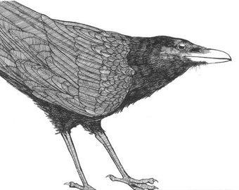 Raven checks you out… original raven illustration black ink on paper bird art 6 x 6