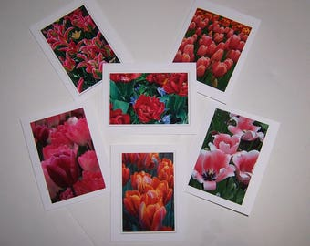 Tulip Notecards, Assorted Floral Cards, Tulip Photo Cards, Photo Notecards