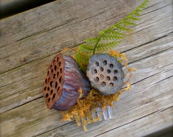 Lotus Pod forest comb
