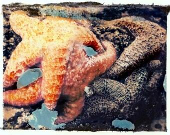 Starfish in Tidepool Transfer Fine Art photograph