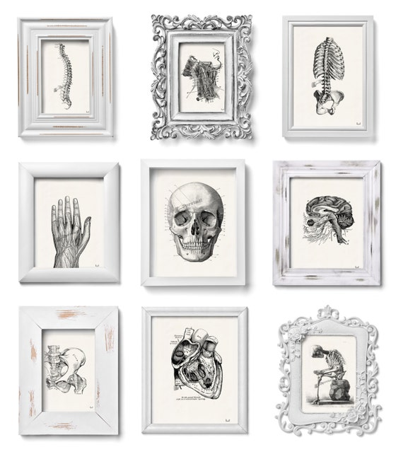 This set of Anatomy prints SALE this selection of prints for only sixty dollars. Anatomy collection of Prints on  SET014