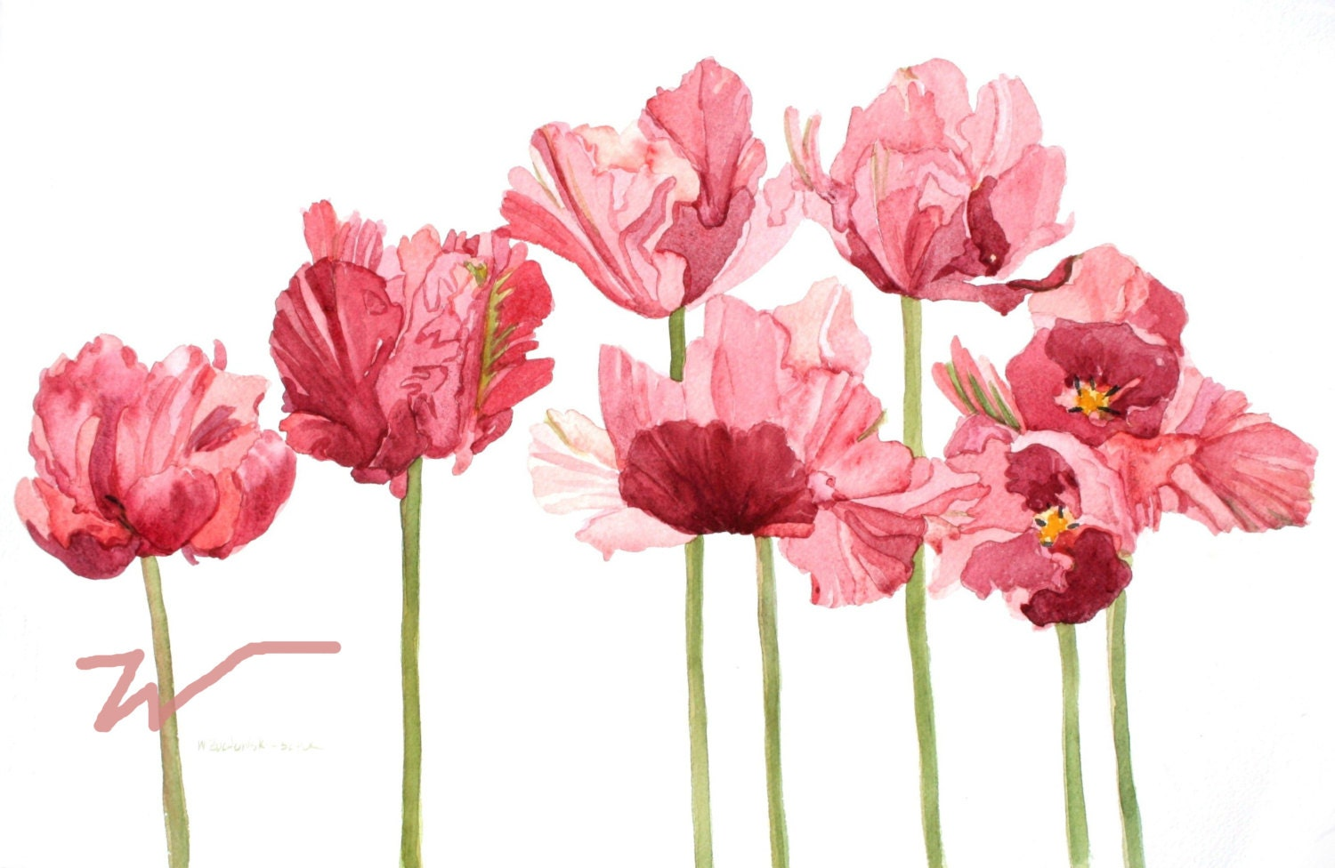 Pink Parrot Tulip Field Watercolor