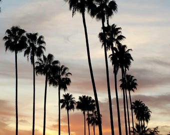 California Palm Trees with Sunset. Los Angeles Photography, Palm Tree Photo Print, California Photography. Wall Art, Art Print, Photo Print