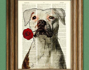 "Pitbull Art Print ""Rosie the Lover"" White Pit Bull with flower illustration beautifully upcycled dictionary page book art print"