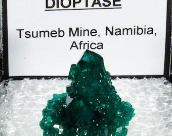 Tsumeb Dioptase Specimen in Perky Box, Dioptase Crystals