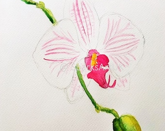 Single white orchid - print of original watercolour painting