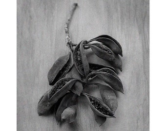 Modern Decor Photograph, Abstract, Botanical, Sepia, Black and White, Natural-Tone On Tone