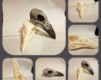 Customised Resin Crow Skull *Handmade*