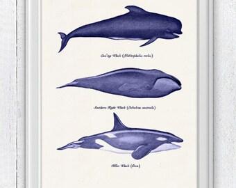 Whales and dolphins n1-  sea life print- Home wall art whales print SAS063