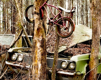 1968 Chrysler Newport with a bike grown up in a Tree Photograph