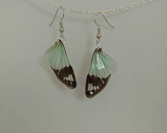 Real blue Cicada Wing earring (Small)