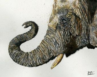 Art Print. Elephant Cyril
