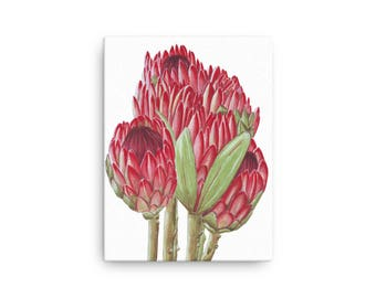 Protea watercolor art on Canvas/Christmas gift for her/floral home wall decor/protea flower painting