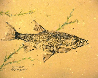 ORIGINAL Shiner real GYOTAKU ( Fish Rubbing ) on hand made Paper Lake Art Decor by Barry Singer