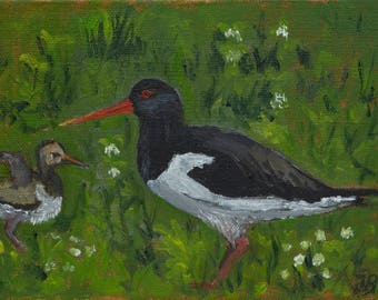 """Oystercatcher and Chick, Slimbridge, small unframed original oil painting, canvas board 5x7"""""""
